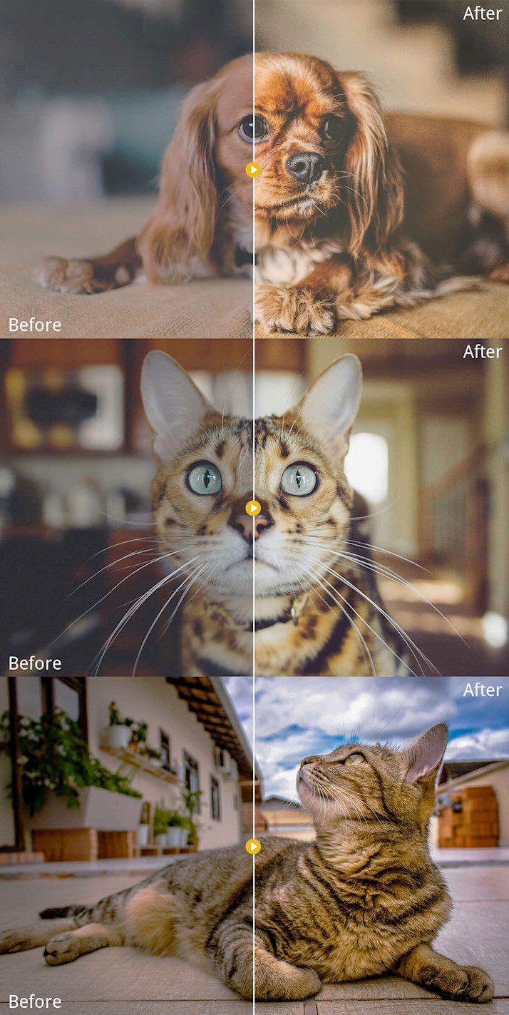 Presets la Lr:Fotografía de mascotas Lightroom Presets