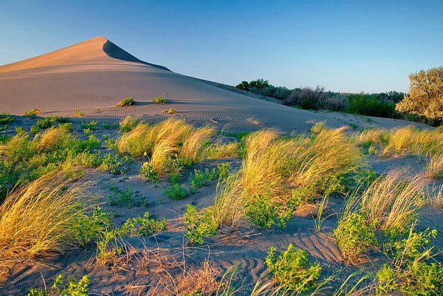 La luz que recorre la foto de izquierda a derecha selecciona cada brizna de hierba y la textura de los granos de arena.