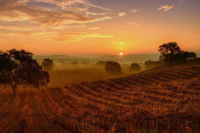 La hora dorada en fotografía: La luz difusa del amanecer se extiende sobre este viñedo, iluminando el primer plano y el fondo sin sombras nítidas.