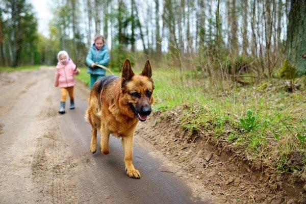 Pequeñas hermanas caminando perro