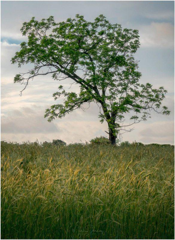 5 errores comunes en la fotografía de paisajes