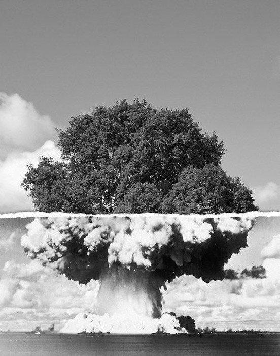 una imagen de un árbol y una nube atómica de una bomba atómica se han fusionado: ejemplos de yuxtaposición en fotografía