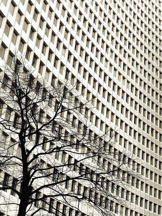 Foto de un edificio de ventanas múltiples con líneas muy claras y rectángulos perfectamente repetidos yuxtapuestos con las curvas desiguales del árbol.
