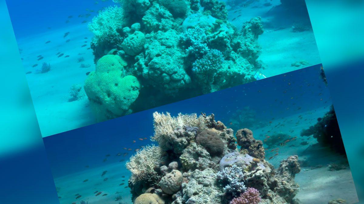 programa elimina agua de mar