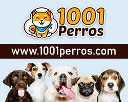 promo-1001perros