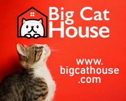 promo-bigcat-house