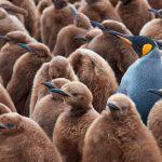 30 ideas y consejos de yuxtaposición en fotografía