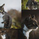 Mujer paga una sesión de fotos profesional para su gato, no se arrepiente