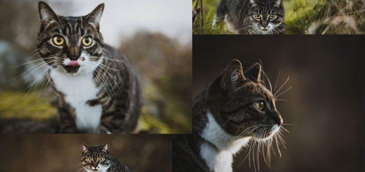 Sesión de fotos profesional para gato